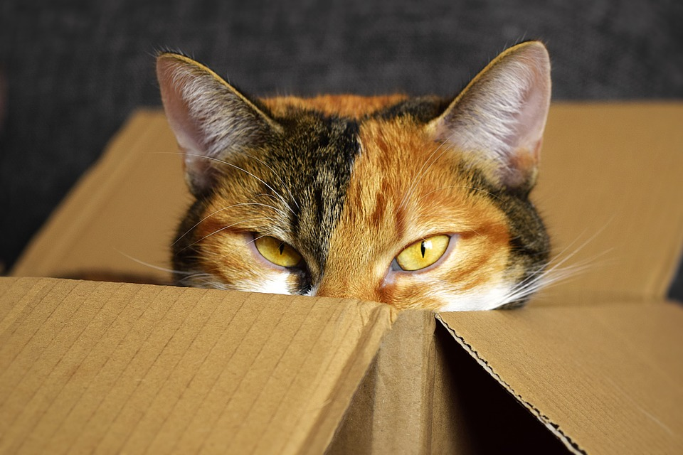Free cardboard boxes will save you money, and you'll be bale to pack all your belongings for free!