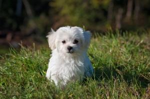 Puppy on a field