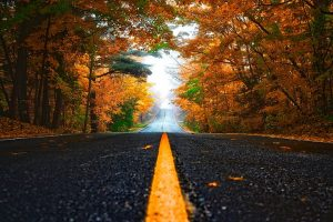 a road during fall