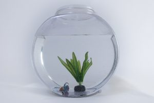 Fish tank with a gold fish and a plant