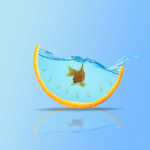 a fish in an orange aquarium